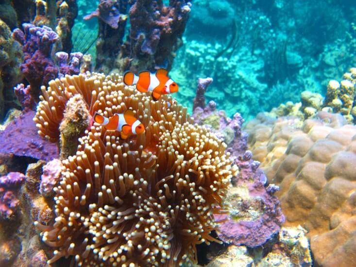 Laut-laut Indonesia Terbaik untuk Snorkeling